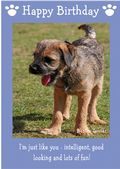 "Border Terrier-Happy Birthday - ""I'm Just Like You"" Theme"